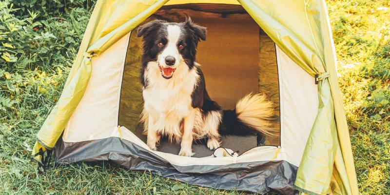 how to camp with a dog